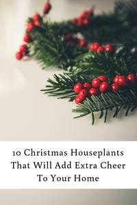 10 Christmas Houseplants That Will Add Extra Cheer To Your Home