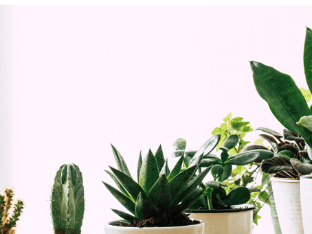 Houseplants Perfect For Beginners