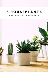5 Houseplants Perfect For Beginners
