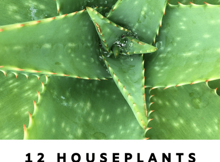Best Houseplants for a Healthy Home