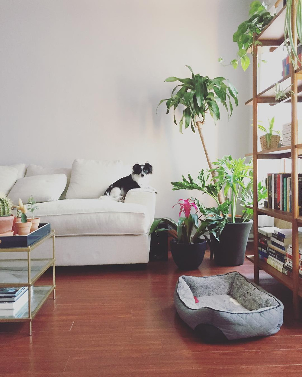 Houseplants Decor Ideas Couch Living Room