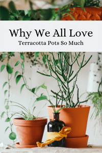 Why We All Love Terracotta Pots So Much