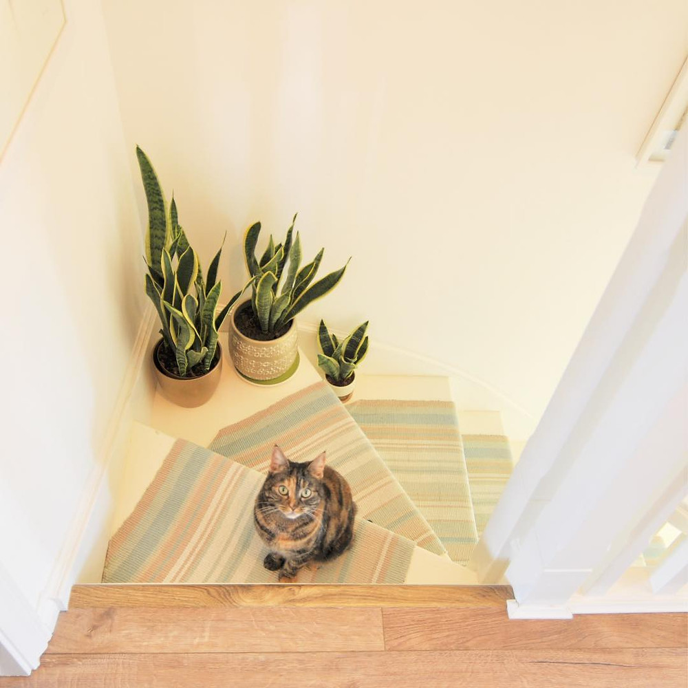 Houseplants Decor Ideas Stairs Staircase