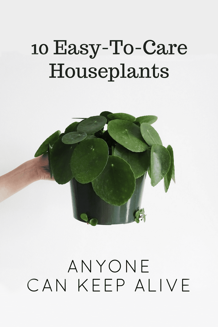 Easy To Care Houseplants Keep Alive