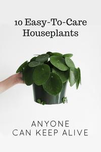 Easy To Care Houseplants Keep Alive
