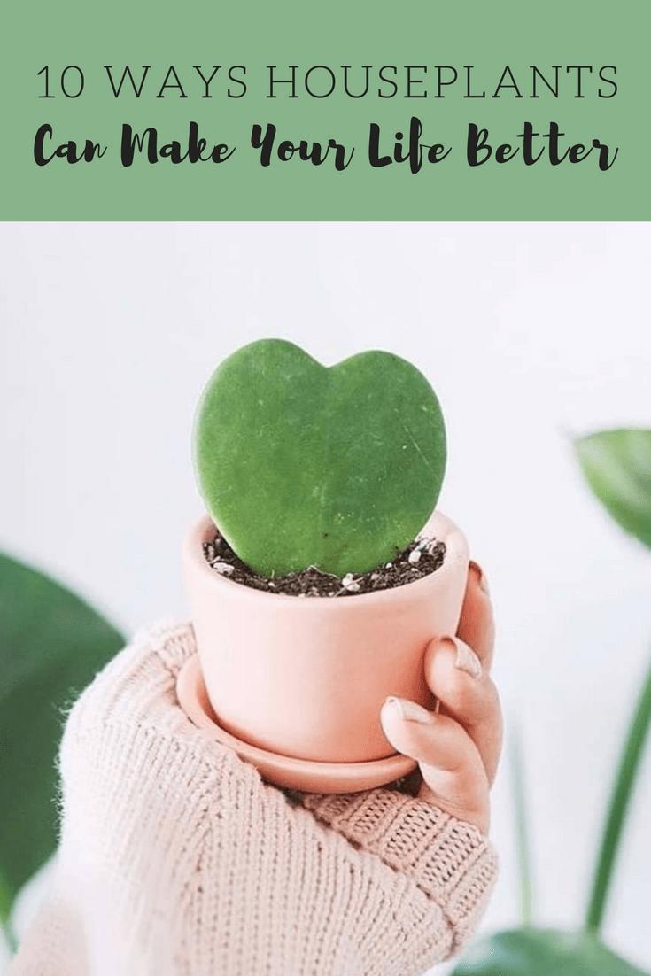 Houseplants Make Life Better
