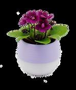 violets.png