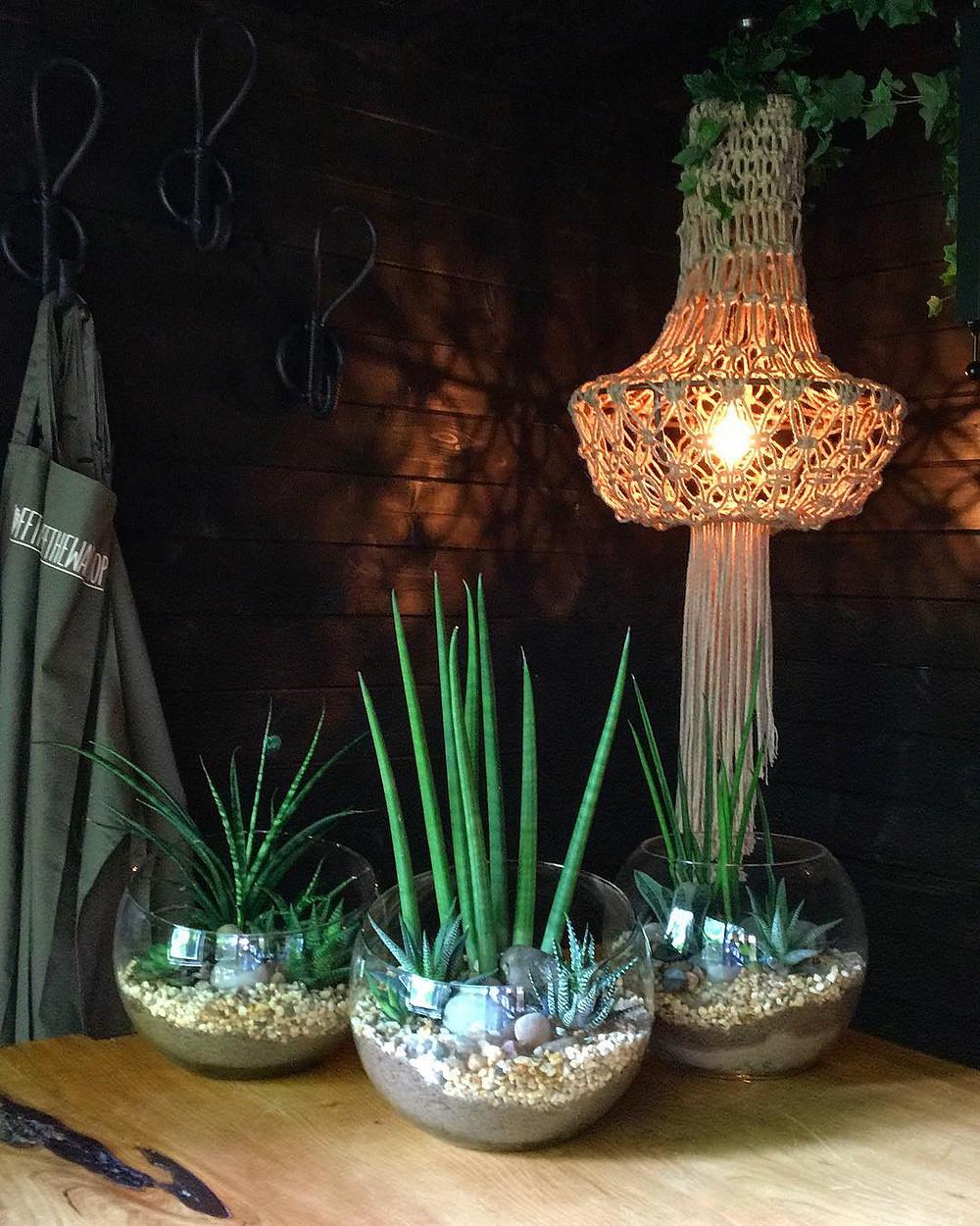 Houseplants Decor Ideas Terrarium DIY