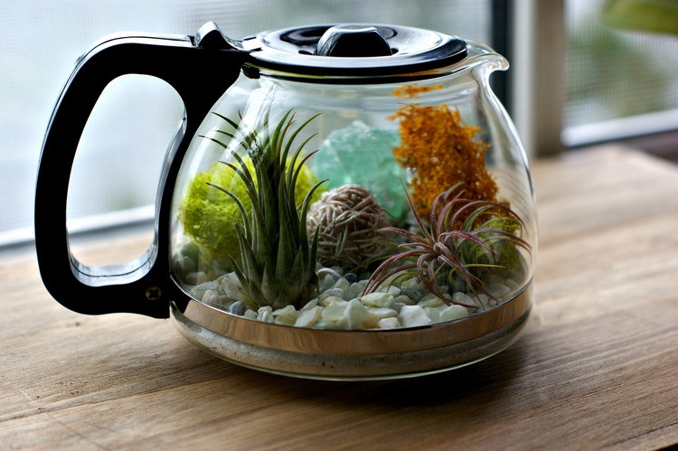 Coffee Pot Terrarium Small Plants Tiny Plant Container DIY