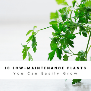 10 Low-Maintenance Houseplants You Can Easily Grow