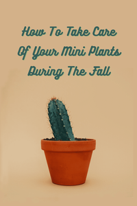 How To Take Care Of Your Mini Plants During The Fall