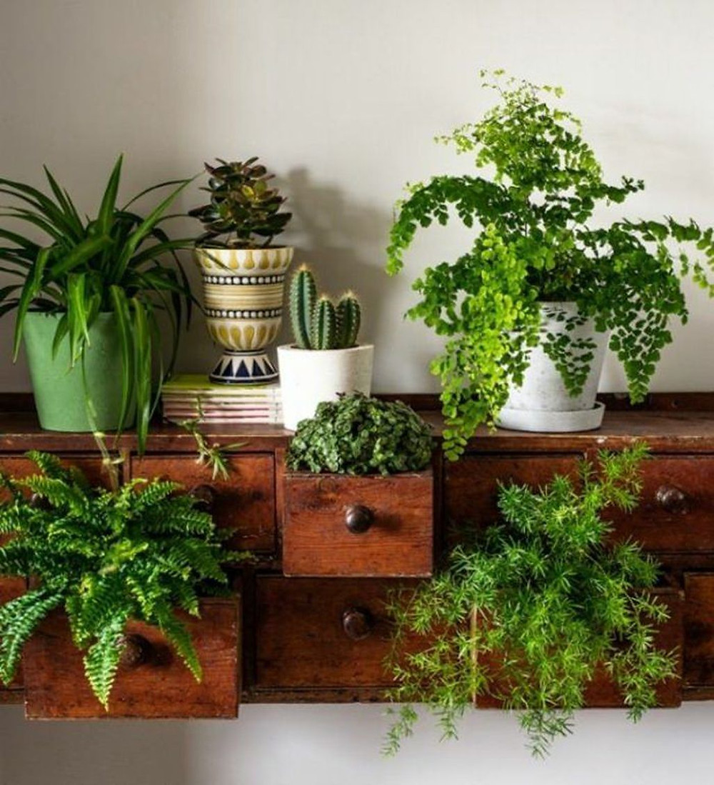 Houseplant Decor Plants Drawers