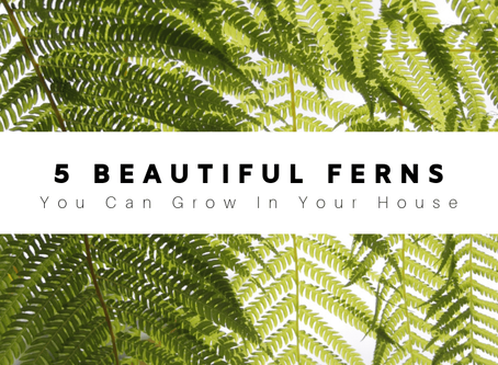 Beautiful Ferns You Can Grow In Your House