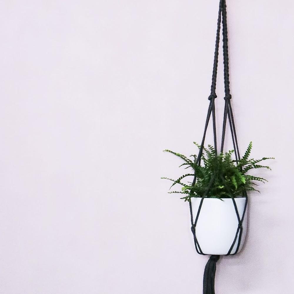 Pellaea Rotundifolia Button Fern Pet Safe Houseplants Non Toxic