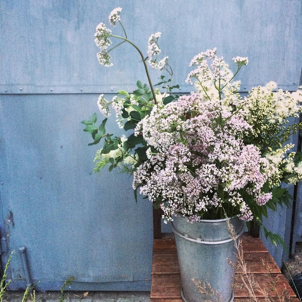 Valerian Plants For Bedroom Sleep