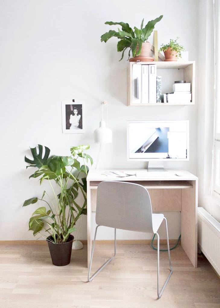 Houseplants Workplace Productivity Desk