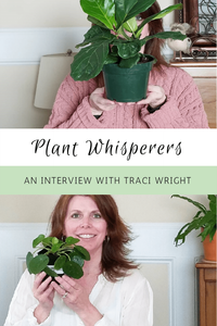 Plant Whisperers Houseplants Lovers Pilea Lovers