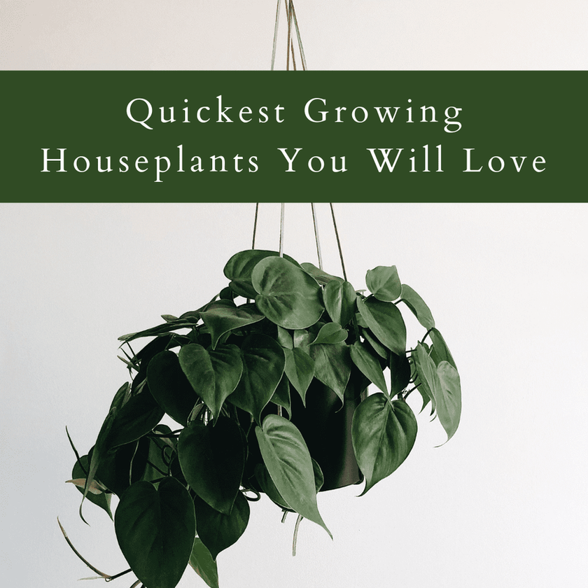 Quickest Growing Houseplants You Will Love