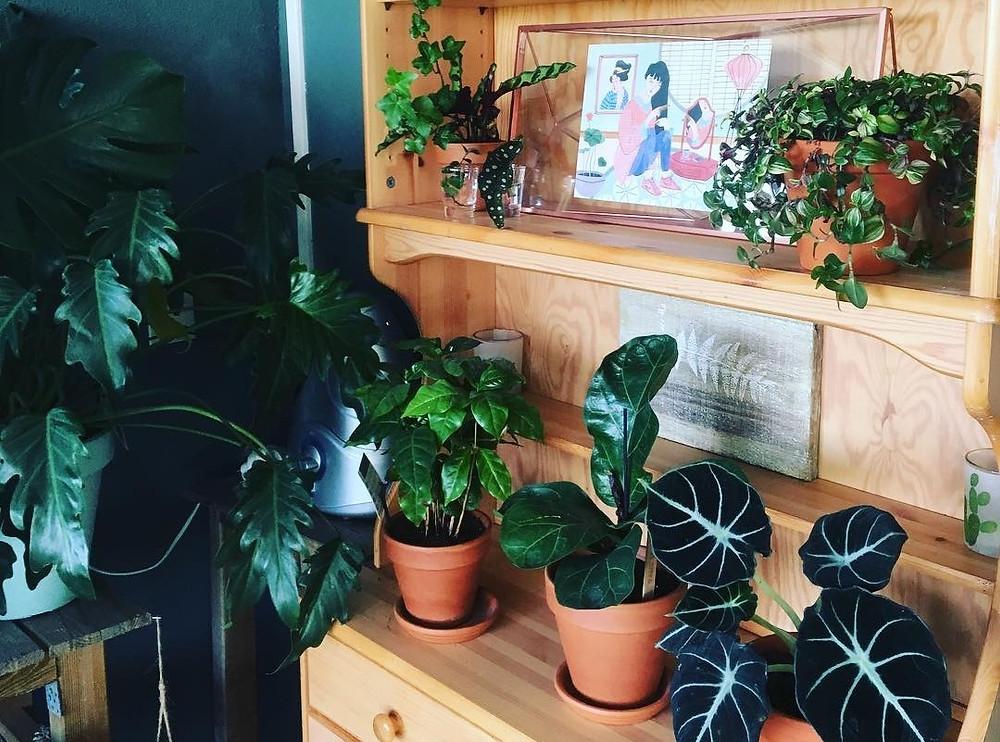 Houseplants Shelfie