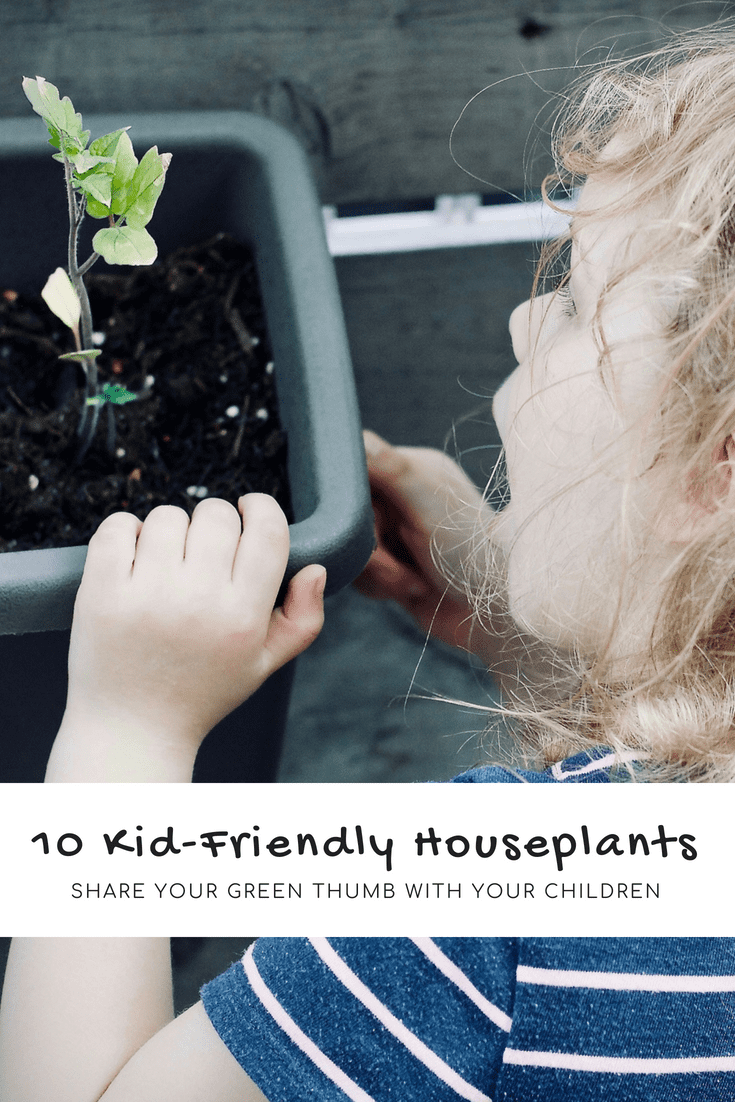 10 Kid-Friendly Houseplants