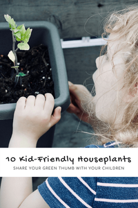 10 Kid-Friendly Houseplants