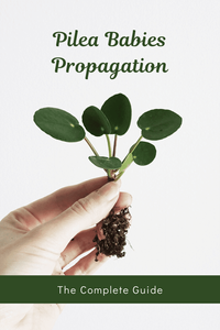 Pilea Peperomioides Babies Propagation: The Complete Guide