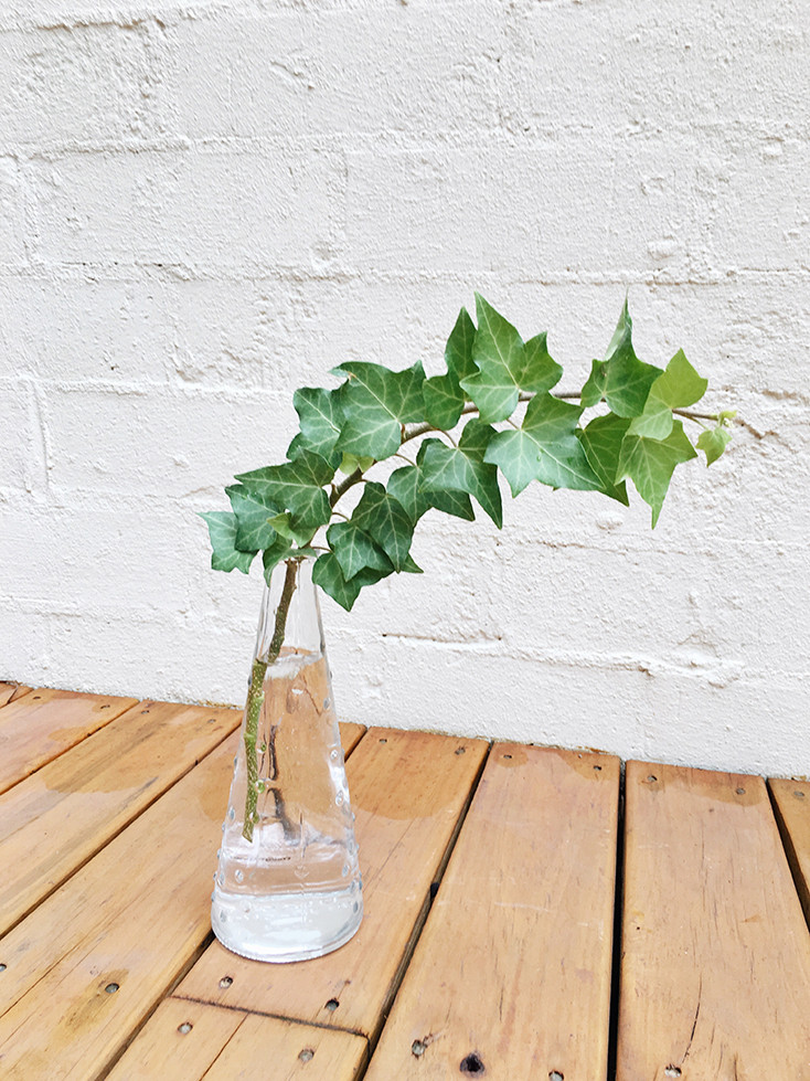 10 Houseplants You Can Easily Grow In Water Hydroponic English Ivy