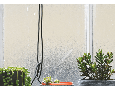 How To Take Care Of Your Houseplants In The Winter