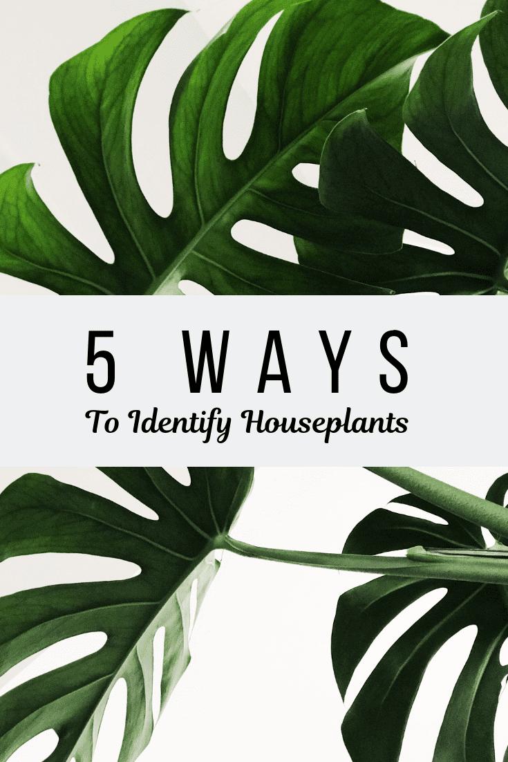 5 Ways To Identify Houseplants