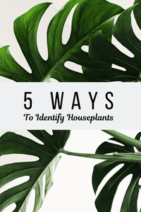 5 Ways To Identify Houseplants