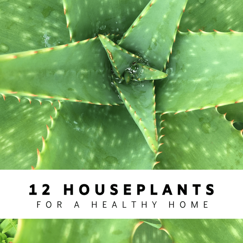 12 Houseplants for a Healthy Home