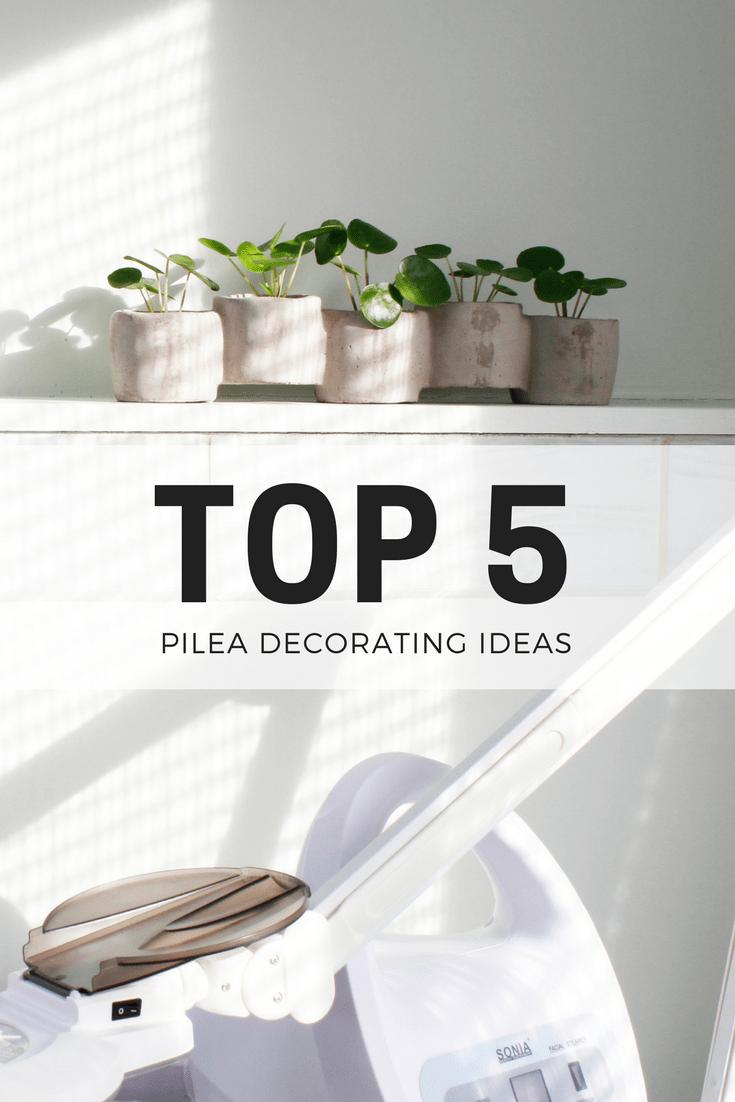 Pilea Peperomioides Decor Ideas