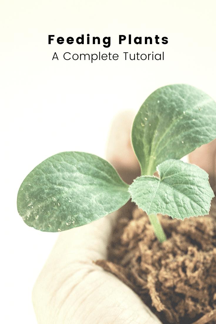 Feeding Plants: A Complete Tutorial