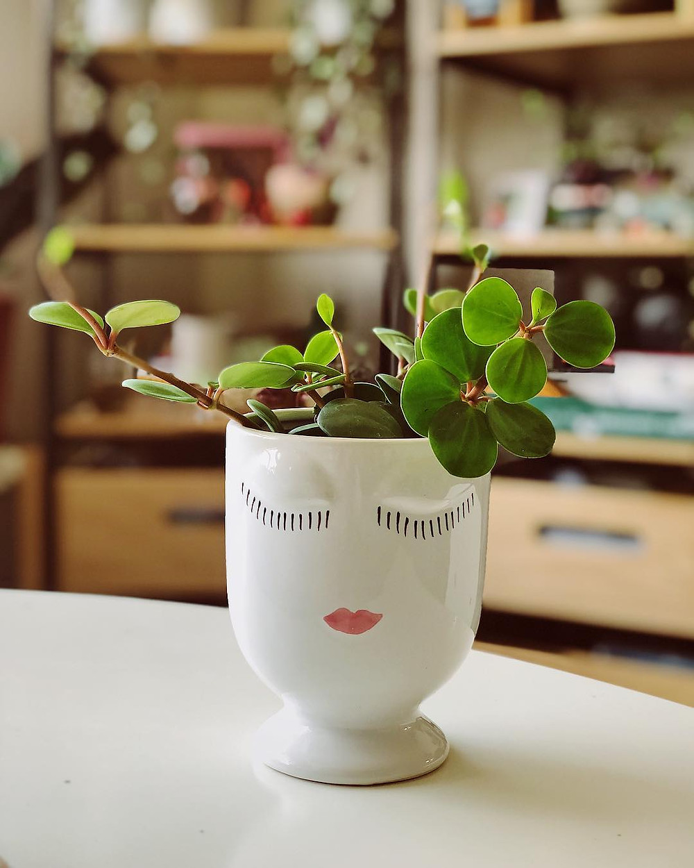 Peperomia Cheap Houseplants You Can Easily Add To Your Home