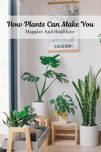 .pilea.com/post/plant-whisperers-angela-eickholdt 22. Here's How Plants Can Make You Happier And Healthier