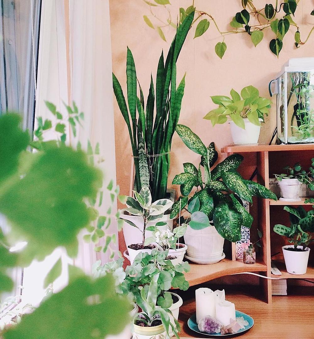 Apartment Jungle Houseplants Lenmorv