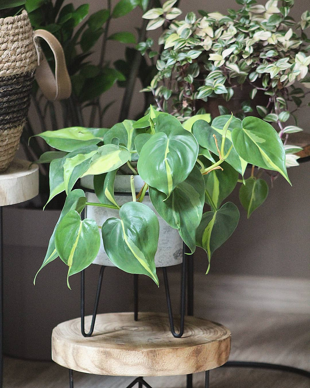 Philodendron Cheap Houseplants You Can Easily Add To Your Home