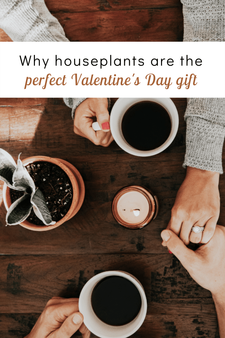 Why Houseplants Are the Perfect Valentine's Day Gift