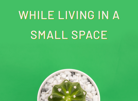 How To Keep Your Plants Alive While Living In A Small Space