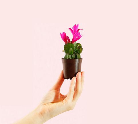 Mini Spring Cactus