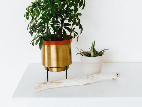Choosing The Right Houseplant For Your Light At Home