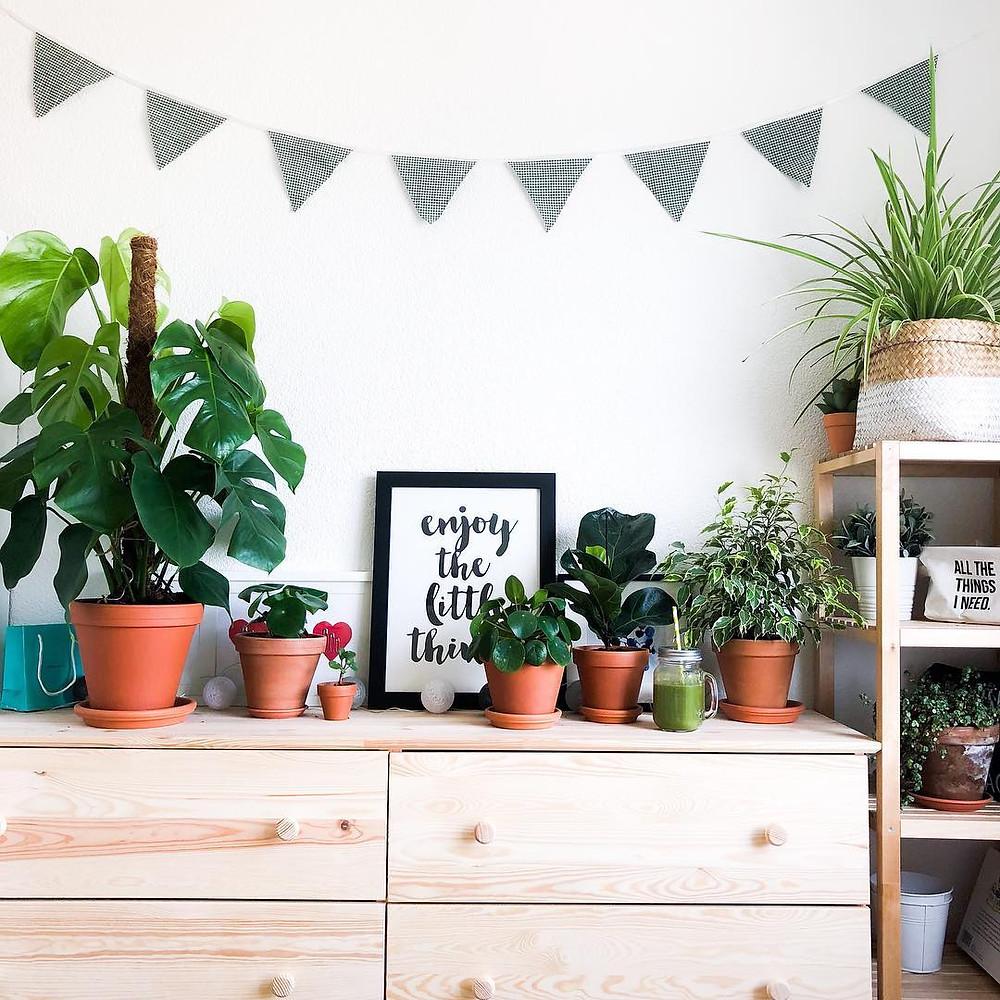 Houseplants Happiness