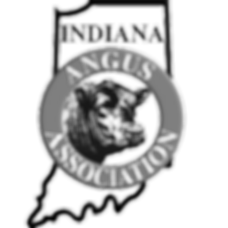 indiana angus association; indiana angus; angus cattle