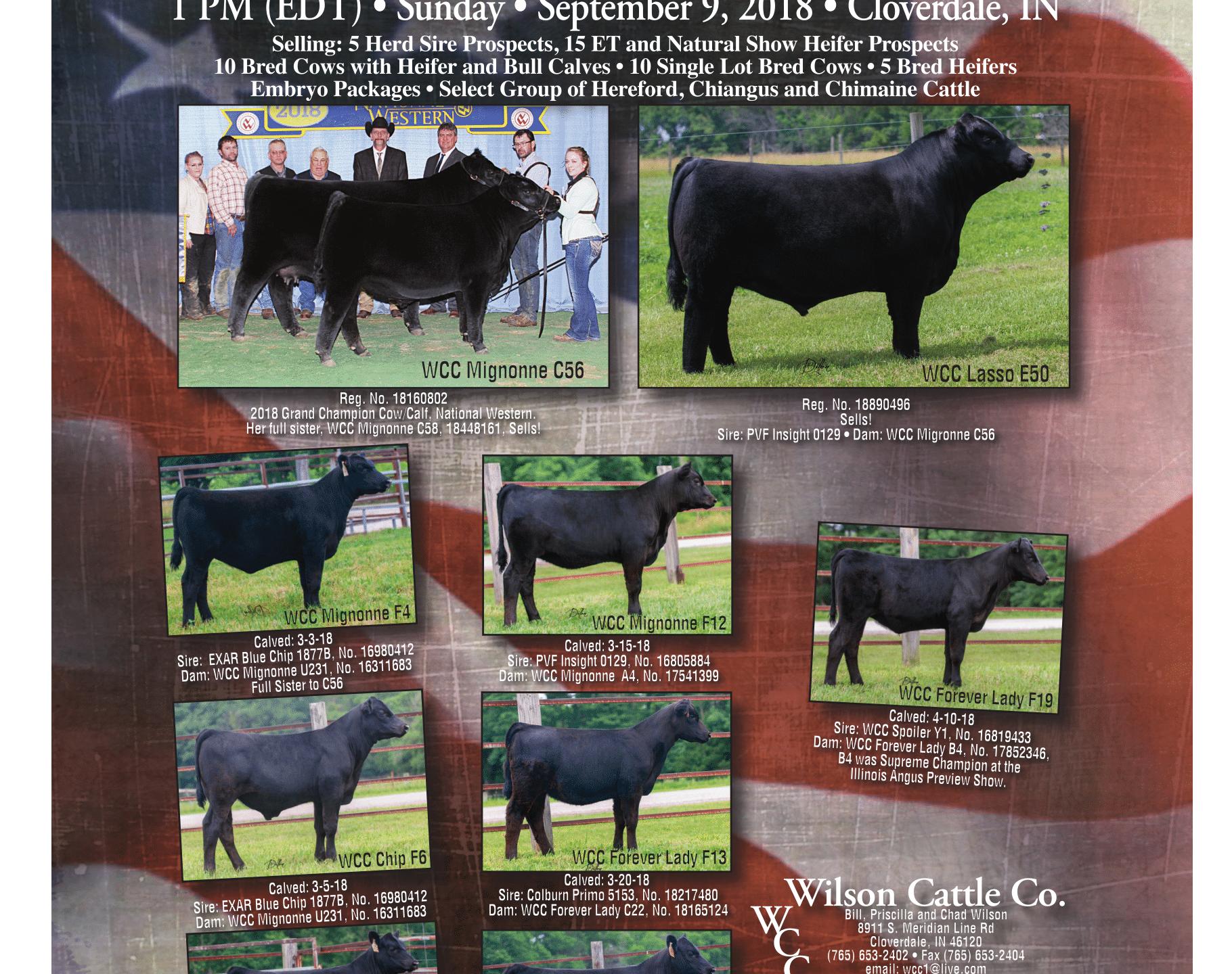 wilson cattle co aj 8-18-1