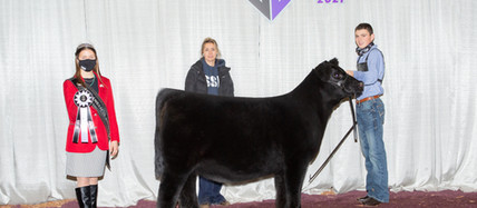 Angus Champions Named at the Cattlemen's Congress Junior Show