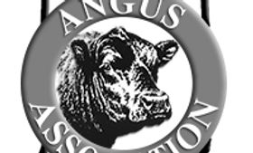 IAA Annual Adult Membership