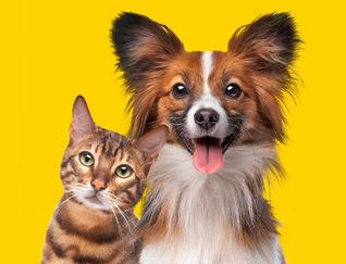 Pet-Insurance-Photo.jpg