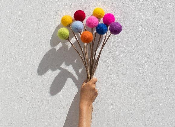 Padstow Rainbow Petit