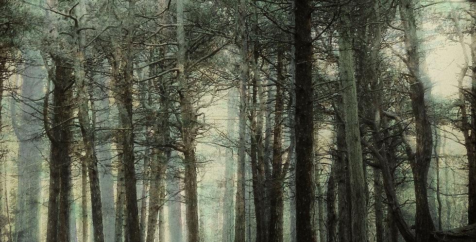 Formby Woodland