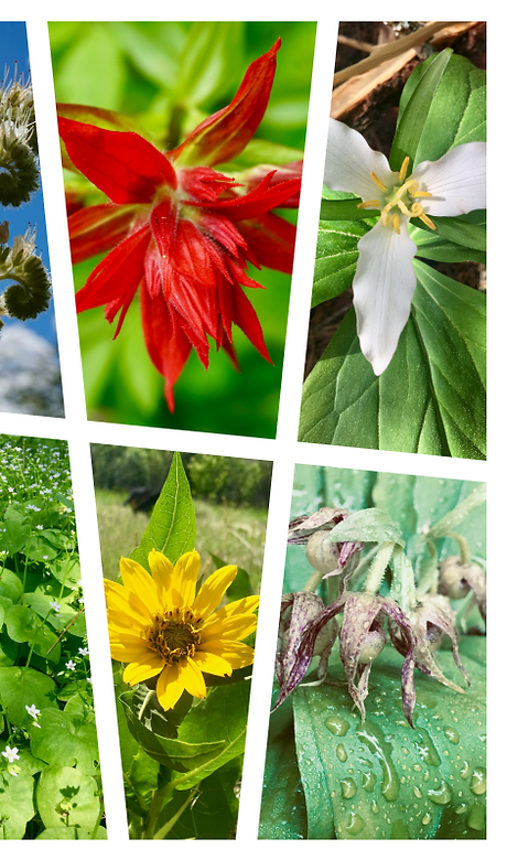 collage_horizontalflowers.png